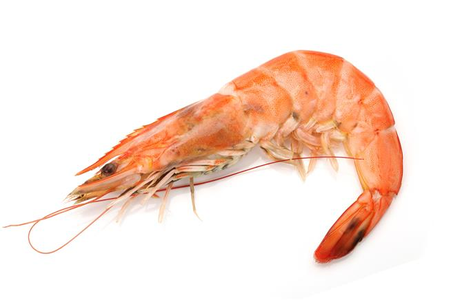 UK researchers find shocking discovery in shrimp research